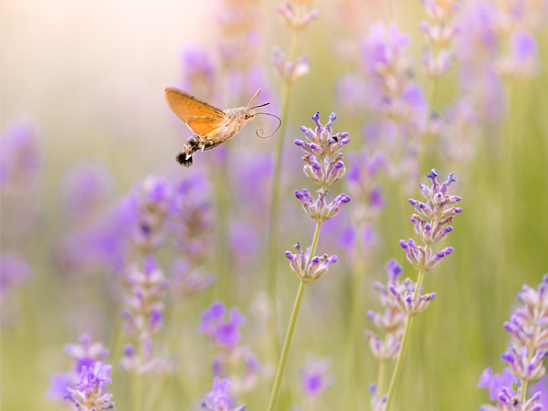 butterfly-home-page